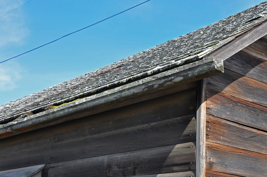 Redwood Gutter - note growth on shingles and gutter
