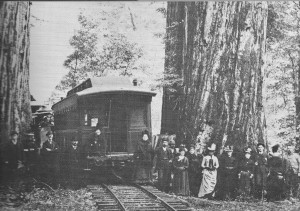 Special Party inspecting the Redwoods at Elm Grove about a mile from the end of the tracks at Cazadero