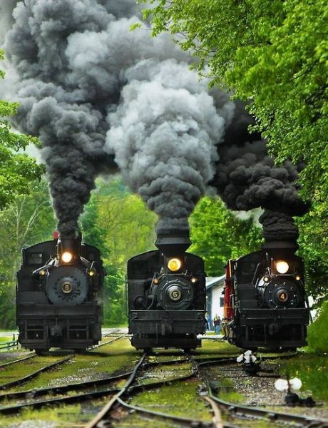 Three Shay locomotives
