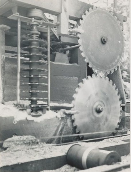 Circular head rig equipped with vertical gang of edger saws set for cutting 2x4's. Salmon Creek Lumber Company, Weott, California.