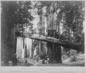 Picnic in the Redwoods