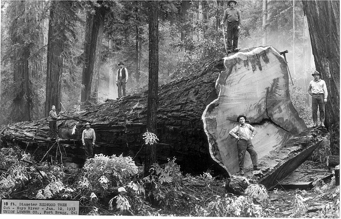 Image result for cutting down redwoods
