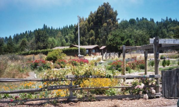 Garden at 33701 Simpson Road, Fort Bragg, CA