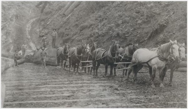 Horses pulling logs along a skid road