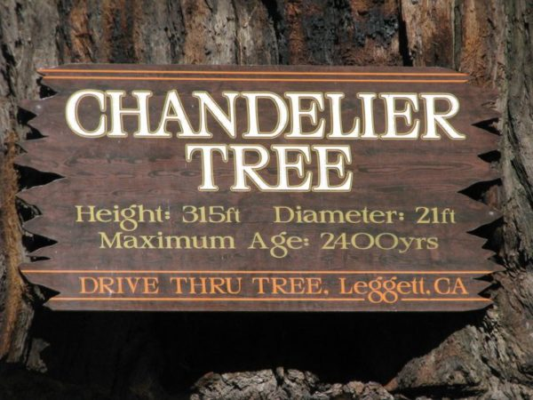 Chandelier Tree. Sign