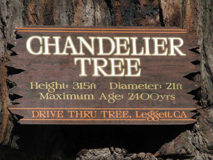 Chandelier Tree Sign