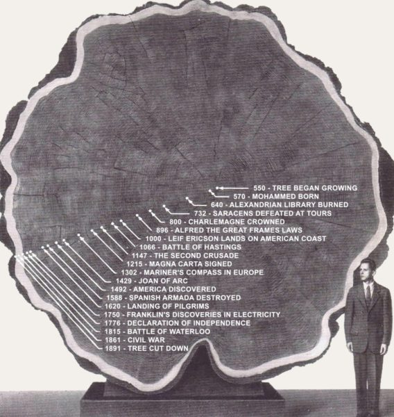 Section of a 1,341 year old Redwood tree