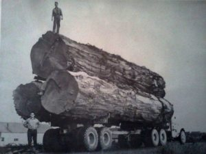 A huge load of logs on a very large logging truck