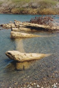 Close up of old log cribsin the Gualala River -by-Harry-Lindstrom