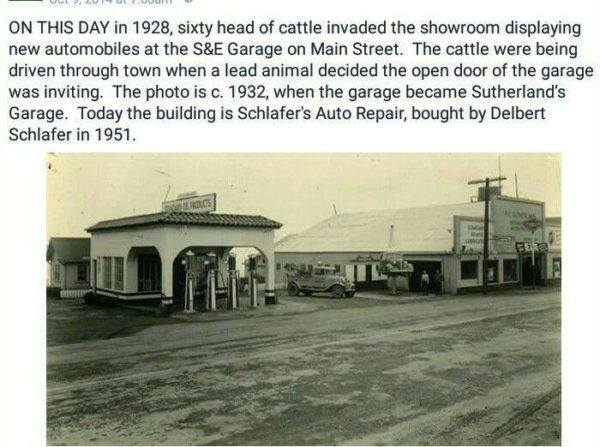 Fort Bragg Garage invaded by cattle in 1928