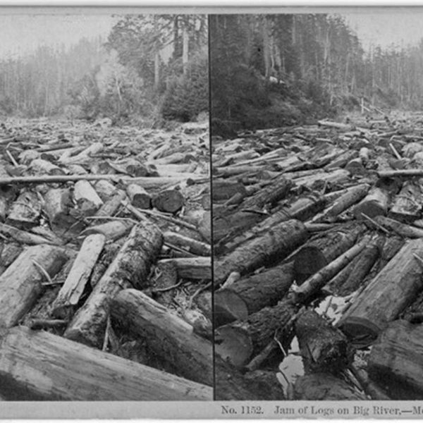 Jam of logs on Big River