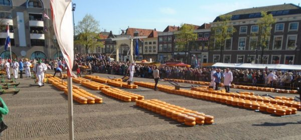 The famous cheese market in Alkmaar