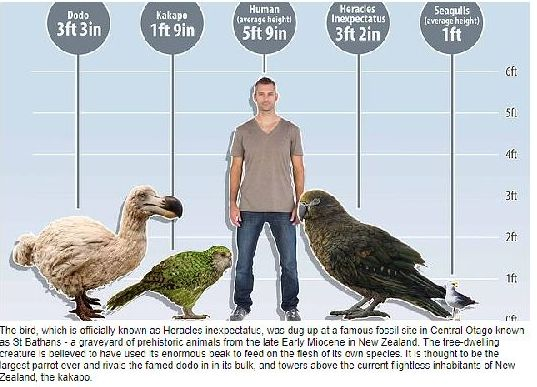 Squawkzilla - comparative sizes